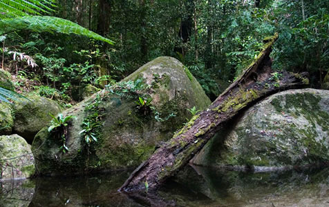 Daintree National Park-1 476x300.jpg